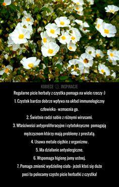 Na co pomaga herbata z czystka? Parsley, Spices, Herbs, Spice, Herb, Medicinal Plants