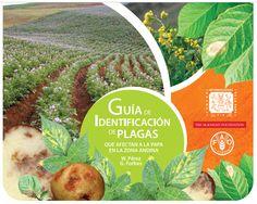 Libros de Agronomia Gratis: Guia de identificación de Plagas - que afectan a la papa en la zona andina ~ Libros Agronomicos Peru