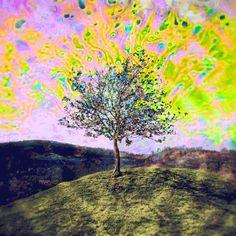 ¿Setas o LSD... - http://growlandia.com/highphotos/media/Setas-o-LSD-Has-probado-alguno-de-los-dos/