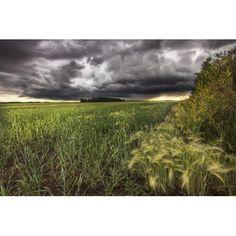 Thunder Clouds Over Field Of Wheat North Of Edmonton Alberta Canvas Art - Dan Jurak Design Pics (34 x 22)