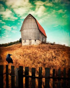 Old Barn with Crow on Fence -