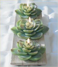 Succulent Candles- Botanik
