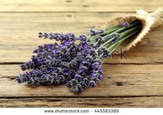 bunch of fresh lavender flowers  - stock photo