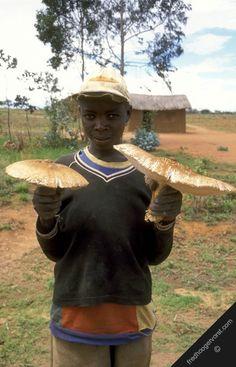Africa | The mushroom seller.  Zambia | ©Fred Hoogervorst