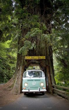 VW Bus & Drive Through Tree by Crux Creative on Creative Market . - VW Bus & Drive Through Tree by Crux Creative on Creative Market - Wolkswagen Van, Vw Beach, Vw Camping, Vw Vintage, Volkswagen Bus Camper, Vw Kombi Van, Volkswagen Beetle Vintage, Volkswagen Beetles, Volkswagen Transporter