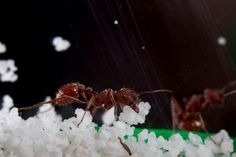 DIY: Here are some ant-themed science projects to consider. Science Fair, Science Experiments, Ant Habitat, Dry Sand, Types Of Soil, Science Projects, Different Recipes, Ants, Backyard