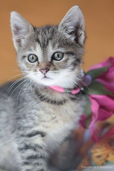 Lovely kitty