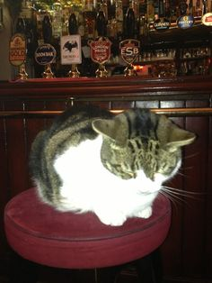 it isn't uncommon for pubs to have a resident kitty!