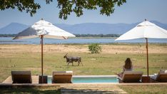 Eland bull in front of camp Wilbur Smith, Rift Valley, Wilderness, Vacations, Gazebo, Safari, Beautiful Places, National Parks