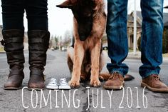 Baby announcement ideas with dogs pregnancy puppys 28 Ideas for 2019 Expecting Baby Announcements, Pregnancy Announcement Photos, Pregnancy Announcement Dog, Pregnancy Test, Erwarten Baby, Baby Dogs, Shire, Pregnant Dog, Kylie Pregnant