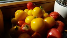 Wir sind stolz auf unsere hauseigenen Tomaten - 100% BIO www.almrausch.co.at Vegetables, Food, Proud Of You, Tomatoes, Veggie Food, Vegetable Recipes, Meals, Veggies