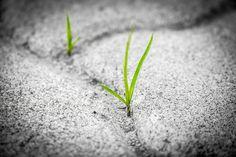 Grass, Pavement, Brick, Poetry