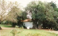 Oliveira,   Aldeamento Turístico de Pedras d'El-Rey (Bloco 46)  Freg.: Santa Luzia - Conc.: Tavira - Distrito: Faro