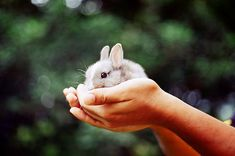 Teeny tiny palm sized bunny. Too cute! #bunny #rabbit #pet @Vanessa Di Blasio this one's for you!