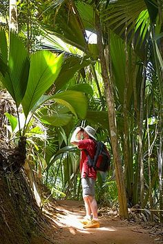 Birdwatcher on trail in the Vallee de Mai Nature Reserve, UNESCO World Heritage…