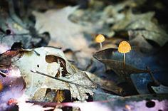 Cynthia LaBarr | Exposure 2015 fall in bloom