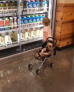 Shopping with baby🛒🐶 - Videos - tierbabys Cute Funny Babies, Cute Funny Animals, Cute Baby Animals, Funny Kids, Funny Cute, Cute Kids, Funny Baby Memes, Super Cute Animals, Cute Baby Videos