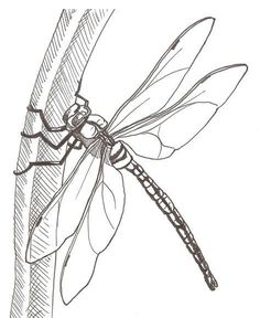How to draw a dragonfly worksheet – Draw to learn - Top 99 Pencil Drawings Line Drawing, Drawing Sketches, Pencil Drawings, Painting & Drawing, Art Drawings, Sketching, Grass Drawing, Tattoo Sketches, Pencil Art