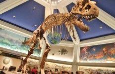 Dino institute dino, dinosaur, dinoland, animal kingdom, walt disney world tami@goseemickey.com