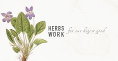 Tonics, Adaptogens, and Alteratives- Herbs Work For Our Highest Good