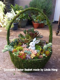 I made this succulent Easter Basket for a house warming gift.  Linda Hong.  - Easter decorations .