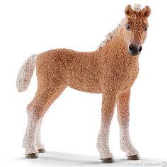 Bashkir Curly foal