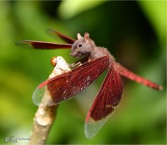 writing prompt: explain the 'Squironfly' what does it eat?, where does it live? etc, use your creature in a story.