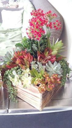 Succulent arrangement just in time for Mother's Day by Ana Calderon