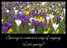 "Spring is nature's way of saying  ""Let's party!""  http://mukthas.blogspot.nl"