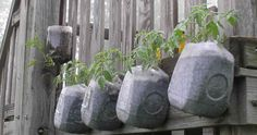 recycled plastic bottle hanging planters | Recycling in the garden! Plastic Make it Possible and a Recycling ...