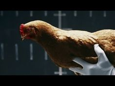 We're not even sure what to say about this commercial for Mercedes-Benz' Intelligent Drive Magic Body Control ride stability system, but it's got chickens Mercedes Benz Commercial, Commercial Ads, Funny Commercials, Funny Ads, Video Advertising, Creative Advertising, Daimler Ag, Benz S Class, Great Ads