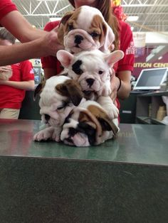 OH GOD, NOW THERE IS A PILE OF WRINKLES. | 21 Puppies So Cute You Will Literally Gasp And Then Probably Cry