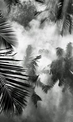 Designs For Garden Flower Beds Palm Trees White Aesthetic, Aesthetic Photo, Paradise Island, Tropical Vibes, White Photography, Palm Trees, Aesthetic Wallpapers, Black And White, Landscape