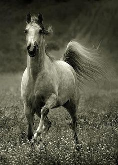 Amazing Photographs of Horses | 20+ pictures |...