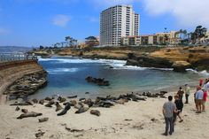 """La Jolla - a view from the """"Children Pool"""" where you can see sea lions in the wild."""