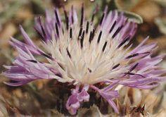 Μωσαϊκό: Φαρμακευτικά φυτά