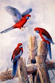 Jenny Hartley's watercolor 'Crimson Rosellas'