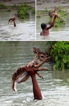 'İnsanlık ölmedi' dedirten fotoğraflar: Bangladeş'te kahraman çocuk, kendi hayatını riske atma pahasına yavru geyiği sel suyunda boğulmaktan kurtardı.