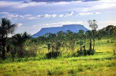 """Desmatar o Cerrado é """"fechar a torneira da água"""", diz especialista - http://controversia.com.br/18797"""