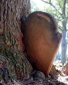 Photo of a headstone partially swallowed by a tree at Old Colonial Cemetery in Metuchen | Julie Walton Shaver Photography
