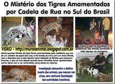 Mural Animal: O Mistério dos Tigres Amamentados por Cadela de Ru...