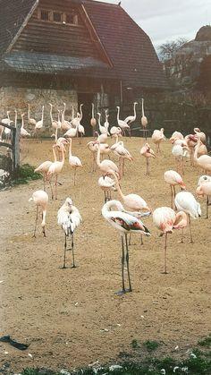 Flamingo party #flamingo #zoo