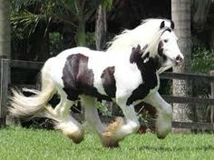 Resultado de imagem para cavalos de raça