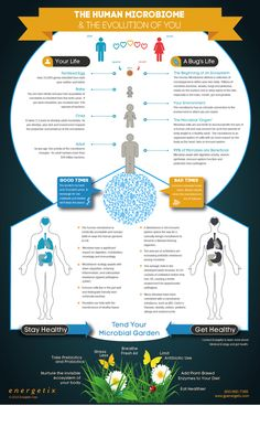 Why Everything We Were Taught About Digestion, Metabolism & Immunity Is Wrong (Infographic)