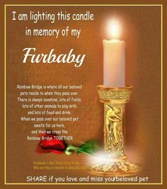 In memory of our furbabies ♥
