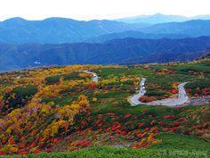 錦秋の乗鞍エコーライン (Autumn Colored Norikura Echo Line Expressway) #Japan #Autumn…
