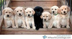 Twitter / dogdogs_album: センターに黒 ...