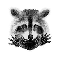 Illustration of cute raccoon vector requests cuddle and snuggle vector art, clipart and stock vectors. Raccoon Drawing, Raccoon Tattoo, Raccoon Art, Cute Raccoon, Racoon, Raccoon Makeup, Raccoon Hands, Rocket Raccoon, Raccoon Illustration