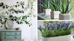 Conheça as melhores plantas para você colocar no seu quarto. Além de dar um UP na decoração do ambiente, elas ajudarão você a ter uma boa noite de sono.