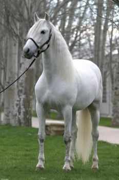 Types Of Horses, Beautiful Horses, Cool Pictures, To My Daughter, Cute Animals, Castle, Handsome, Creatures, Ponies